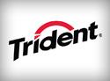 Trident Importer & Distributor Dubai
