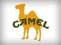 Camel Importer & Distributor Dubai